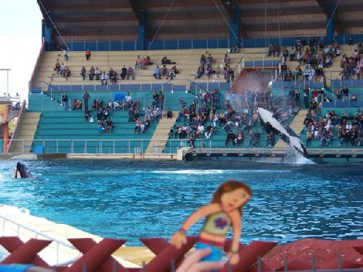 Rencontre avec les dauphins marineland duree